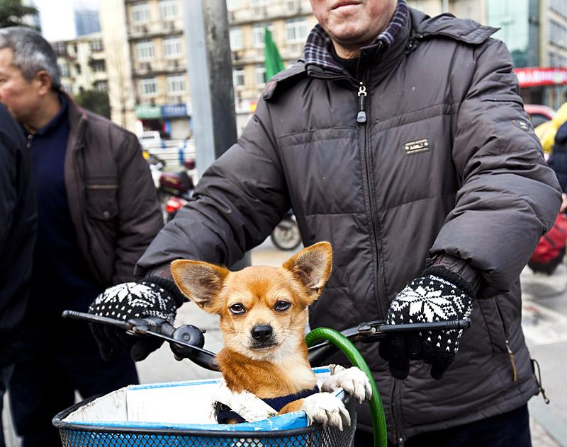 Zesterdaily_china_dog