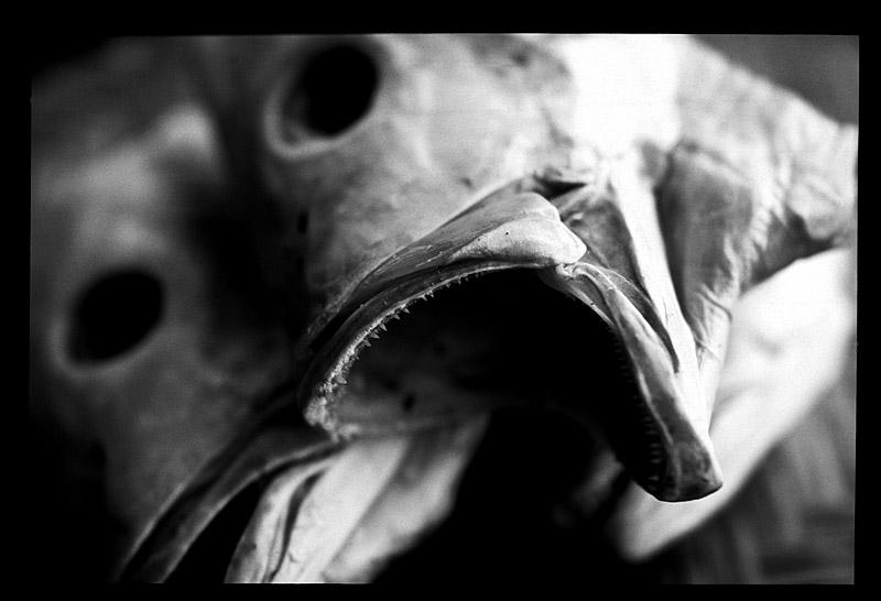 Ghost fish 1 mono