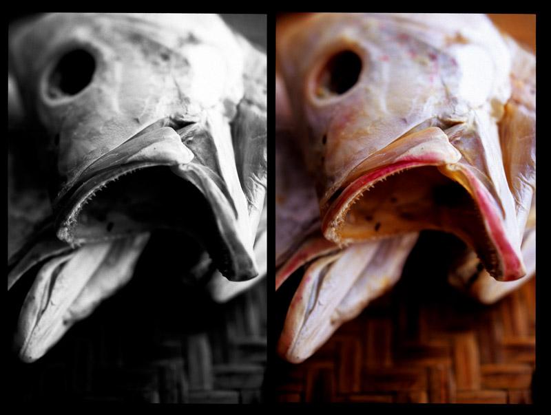 Ghost fish dipt