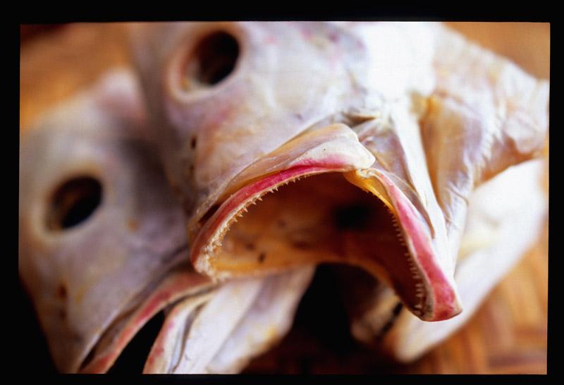 Ghost fish 1